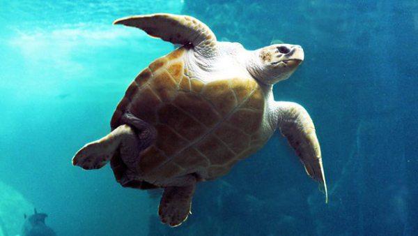 Ocean-themed festival will make a splash in the Bearpit 30 September and 1 October